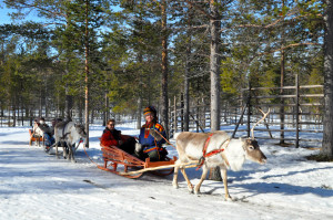 Reindeer sledding on Zoom Vacations tour in Scandinavia