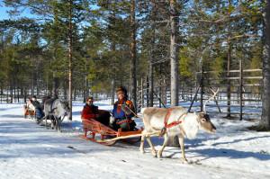 Reindeer sledding on Zoom Vacations tour in Scandinavia