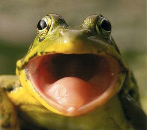 bigmouthfrog